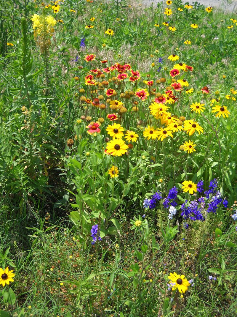 Wildflowers525