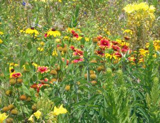 Wildflowersmay525close