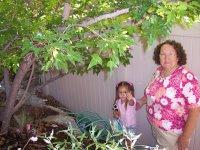 Gardensecrets