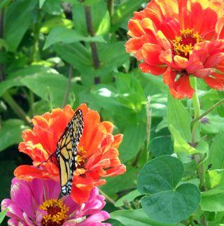 ButterflyOct2
