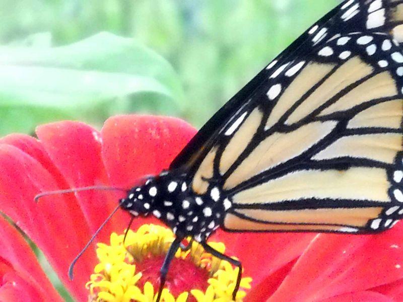 ButterflyOct3