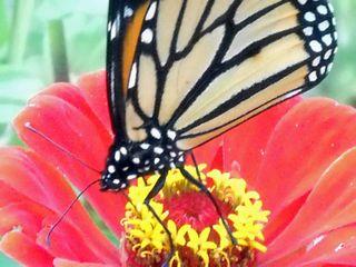 ButterflyOct4