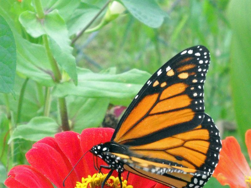 ButterflyOct5