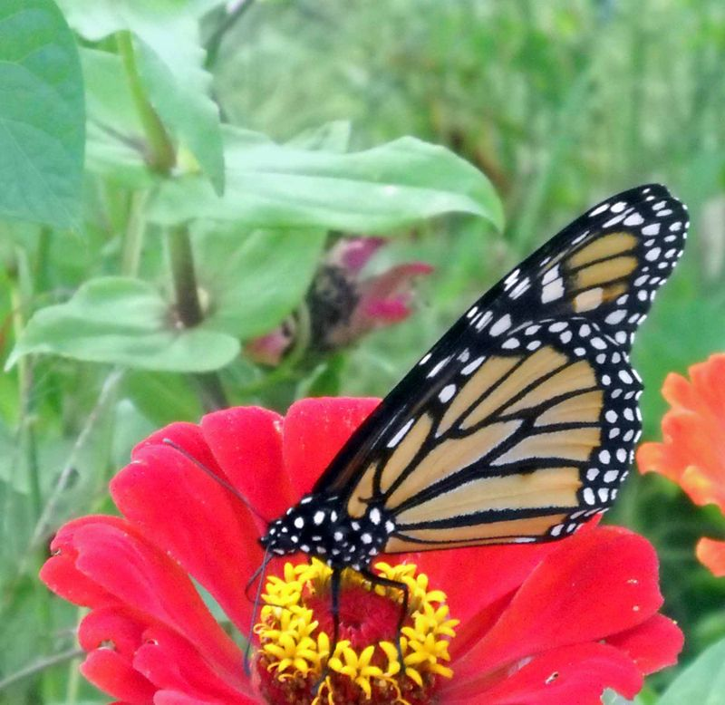 ButterflyOct6