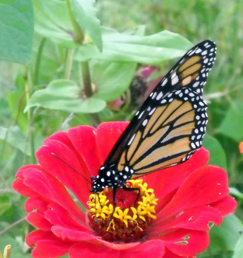 ButterflyOct7