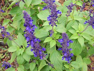 BuffaloOctflowers2