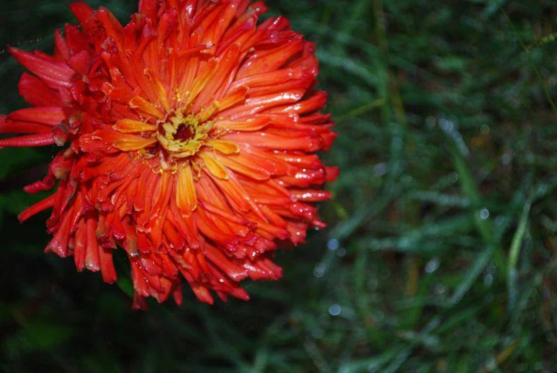 WetOctflower