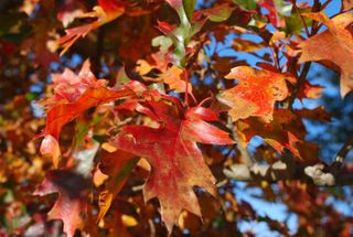 Fall leaves2