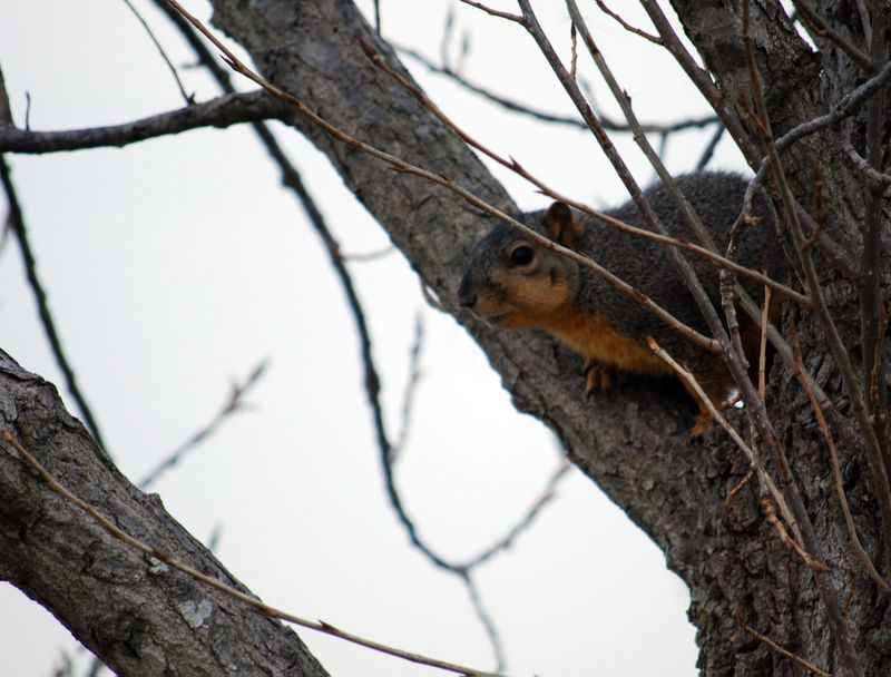 Squirreltree2
