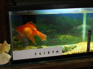 Fat fish2
