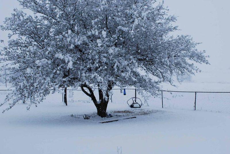 SnowtreeFeb