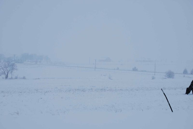SnowbarnFeb