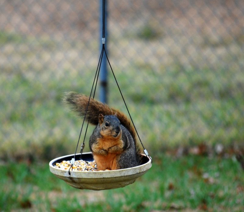 Squirrelfeeder2