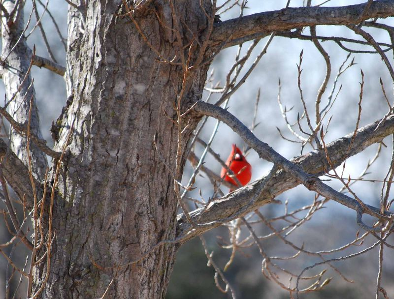 RedbirdJan