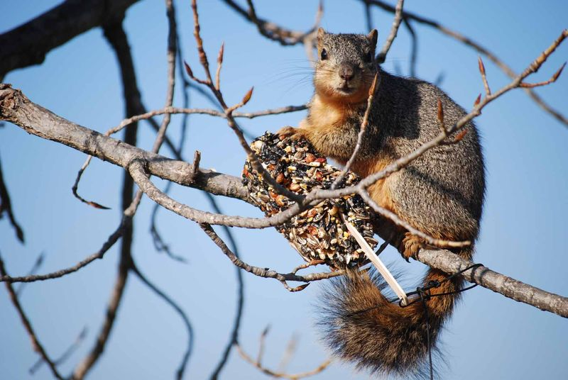 Squirrel11