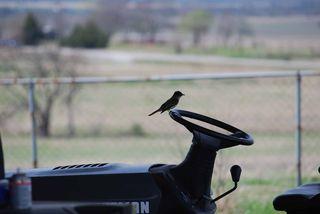 BirdApril