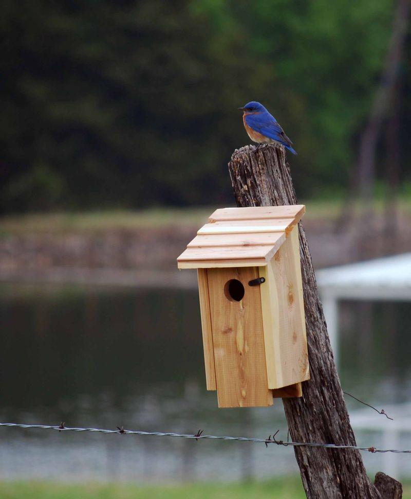 BluebirdAp17e