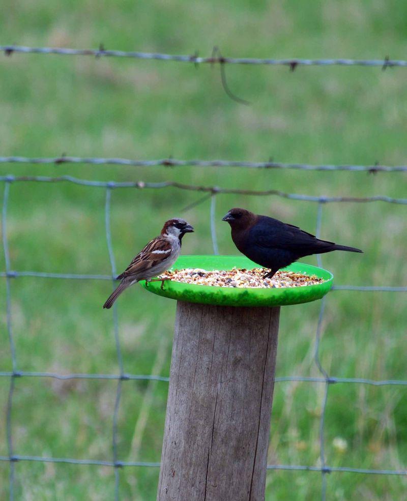 BirdsfeederAp17