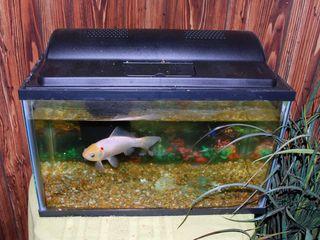 FishAp30