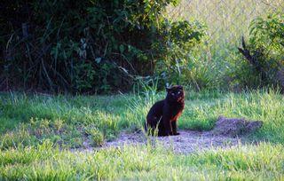 Black catMay17