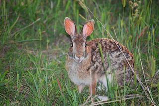 RabbitMay17