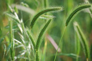 GrassMay27
