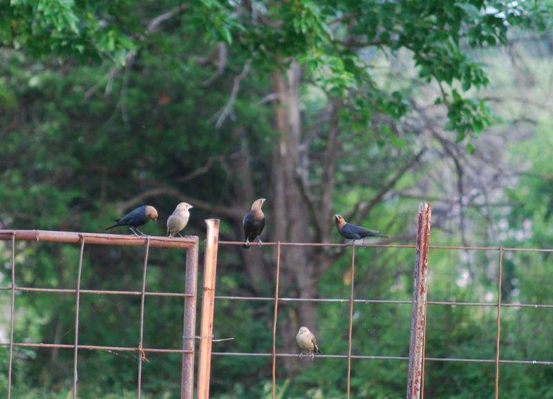 BirdgroupJun3b