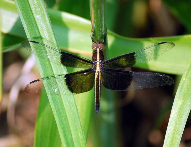 DragonflyJun6