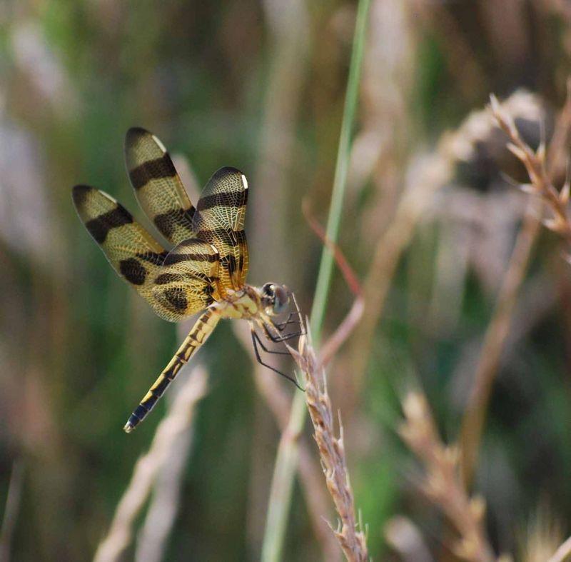 DragonflyJun14