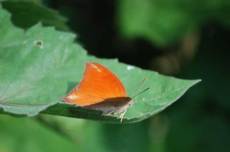Orangeedge