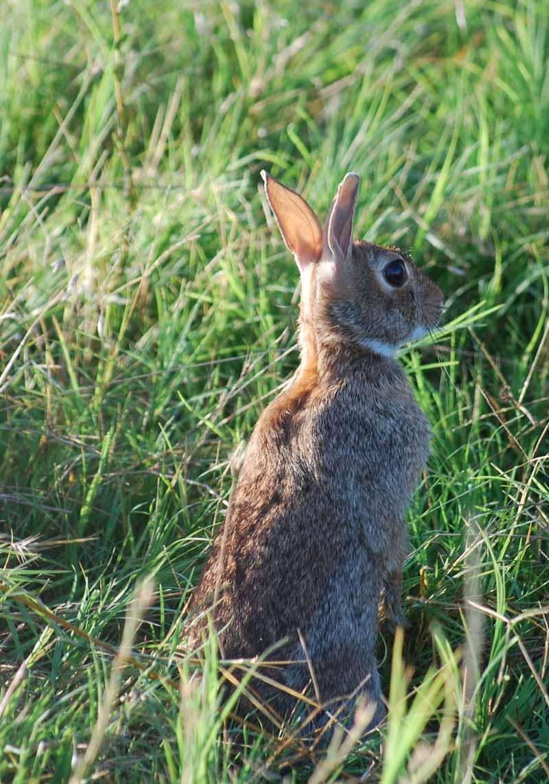 RabbitJul29