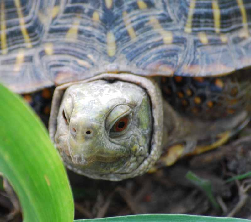 TortoisefaceAug23e