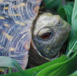 TortoisefaceAug23c