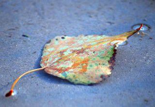LeafAug25