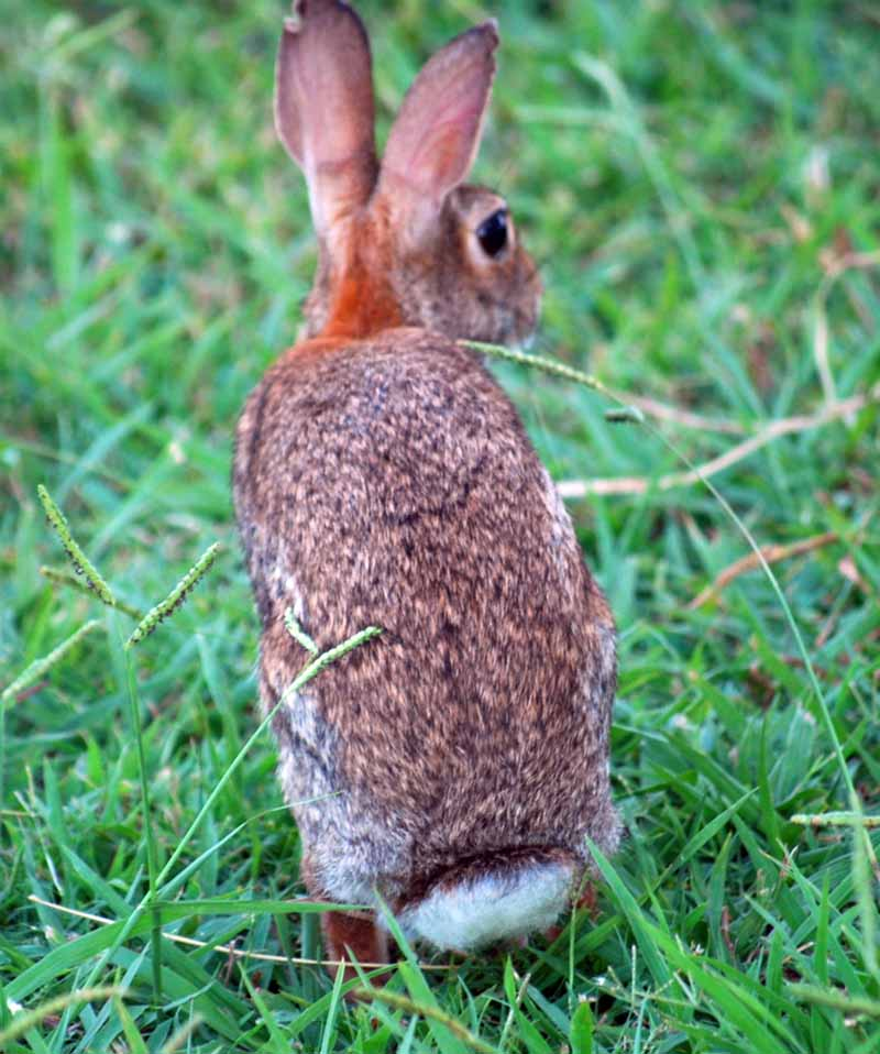 BunnyAug26f