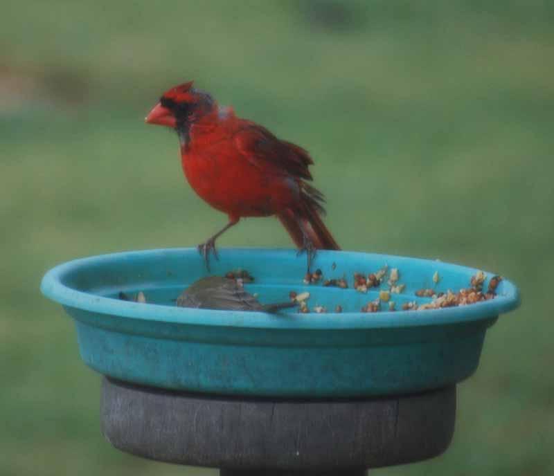 CardinalSept1