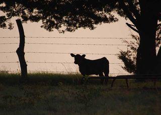 CowshadowSep19