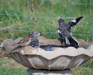 BirdbathSep21g