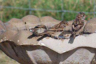 BirdbathSep21j