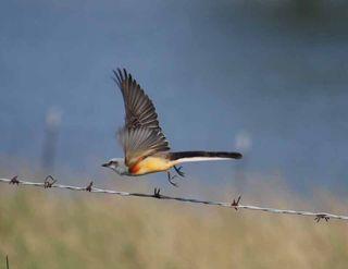 BirdflySep21