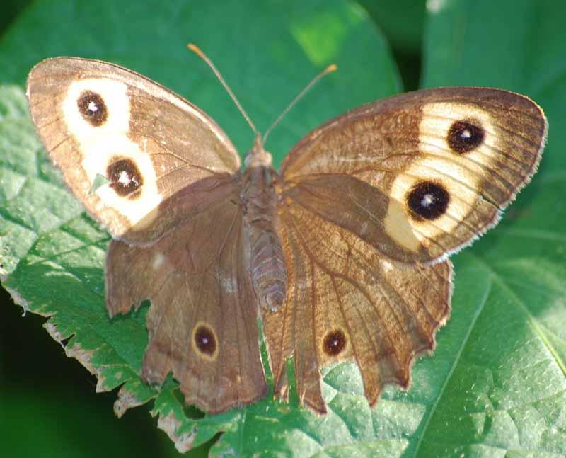 ButterflySep21