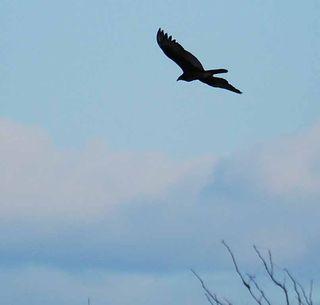 BirdSep26a