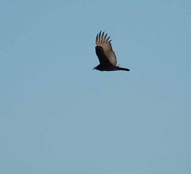 BirdSep26