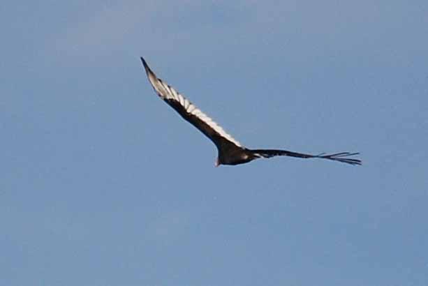 BirdSep26c