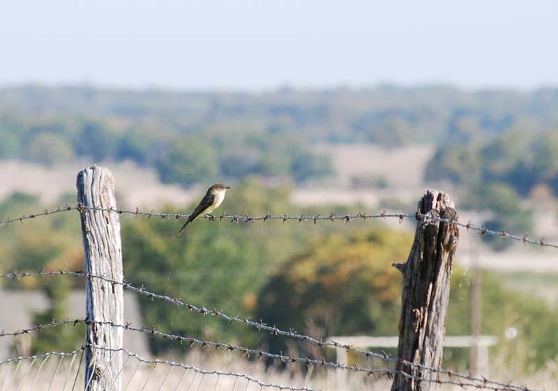 BirdOct10