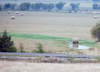 Wet hayOct24a