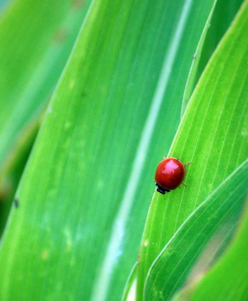 LadybugOct24