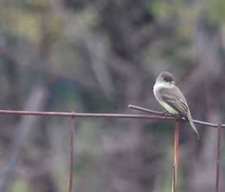 BirdOct24