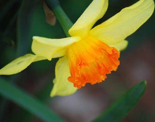 OrangedaffApril2
