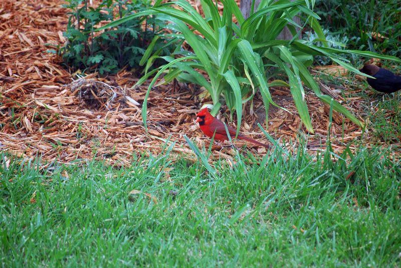 CardinalAp17